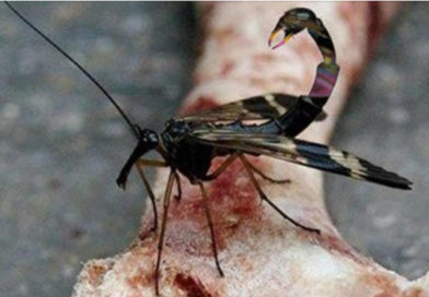 Gay Science Invents Scorpion Fly