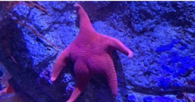 Gays Bioengineer New Big Bottom Starfish Species