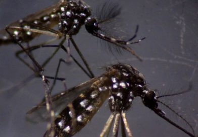 Gays Prepare to Release 750 Million Genetically Engineered Homosexual Mosquitoes on Florida